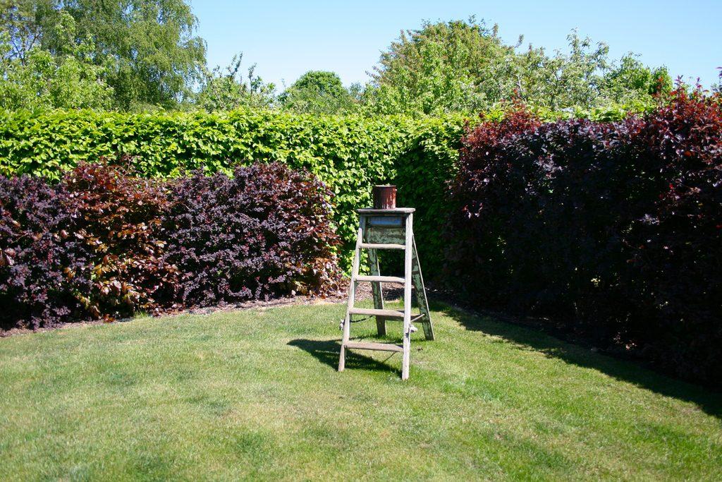 Garden Image 044