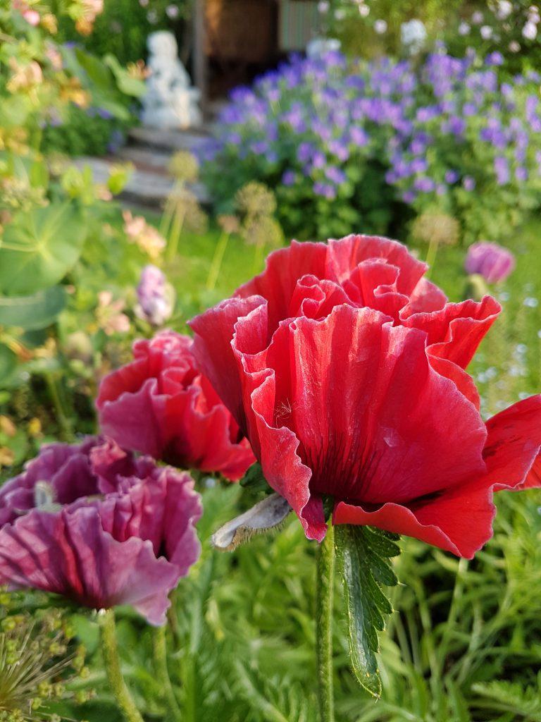 Garden Image 028