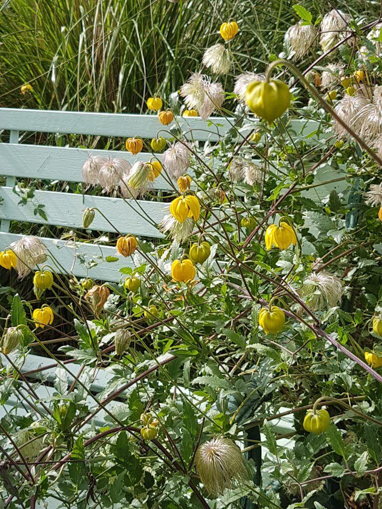 Garden Bench August