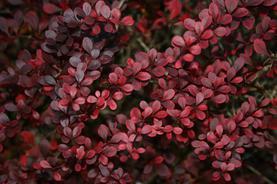 Garden Image 003